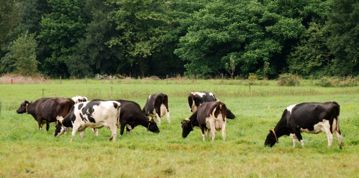 Improved Training Supports Local Meat Supply in Rural Communities